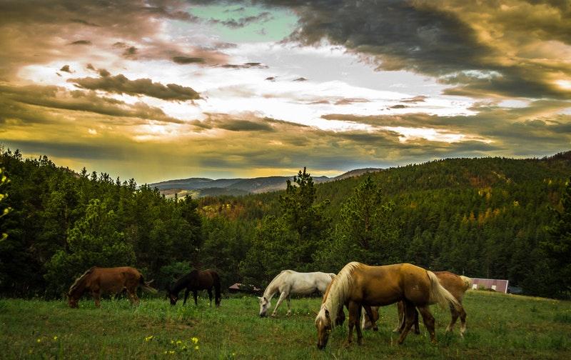 Fodertillskott till häst – Behövs det?