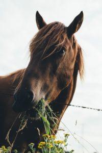 Örter till häst - hästen väljer varierad diet
