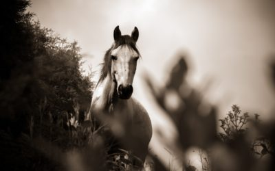 Herbs for horses – Should that be given?